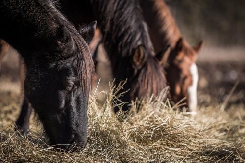 Quel alimentation pour son cheval