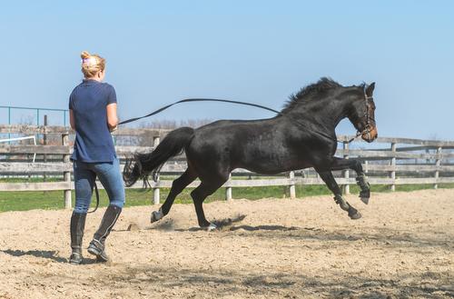 Entraîner son cheval avant une compétition